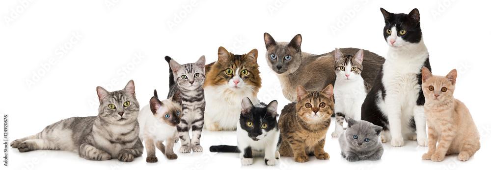 Fototapeta Verschiedene Katzen