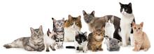Verschiedene Katzen