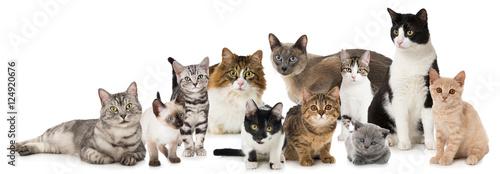 Photo Verschiedene Katzen
