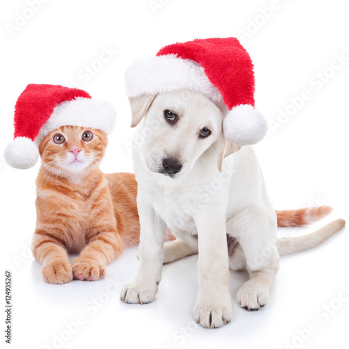 Cute Christmas Pet Puppy Dog And Kitten Cat Dressed Up In Santa Hats