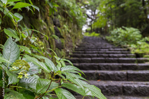 Poster Jardin green leaf and stone stairs leading up a walkway through the for