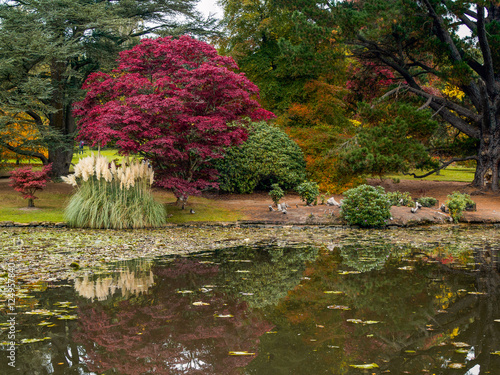 Foto op Canvas Khaki Tree Leaves Changing Colour in Autumn