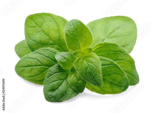 Photo Stands Condiments Oregano herbs