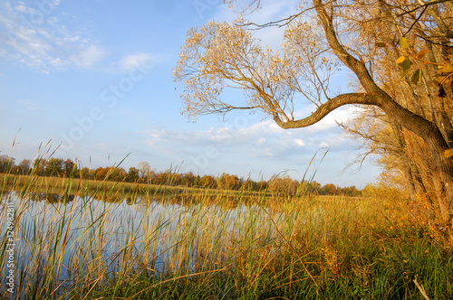 Foto op Canvas Herfst Autumn lake cane trees, green grass