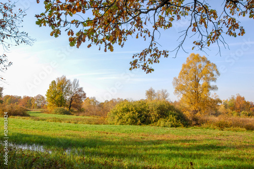 Cadres-photo bureau Arbre Fall lawn oak stands with gold leaves
