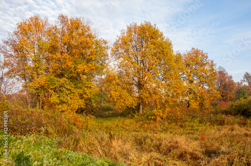 Foto op Canvas Herfst Autumn fog in the mixed forest