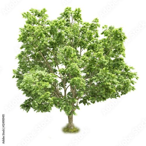 Fotografia, Obraz  Single tree isolated on white background