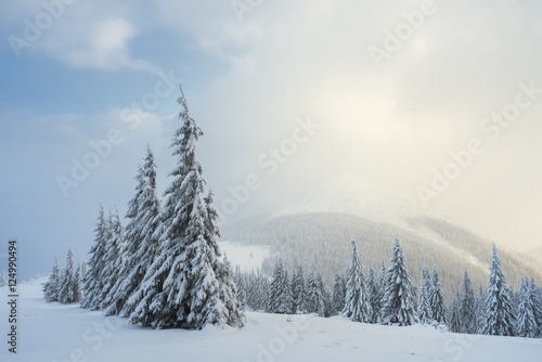 Valokuva  Christmas landscape with fir tree in the snow
