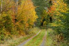 Liten Skogsväg Genom Skog I Höstfärger