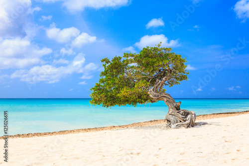 Foto op Plexiglas Caraïben Aruba, Netherlands Antilles. Divi divi tree on the beach