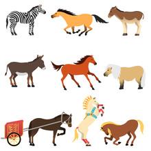 Horses Vector Set.