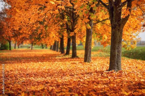 Beautiful autumn colors - 125052028