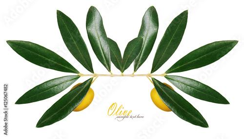 Fototapeta olives obraz na płótnie