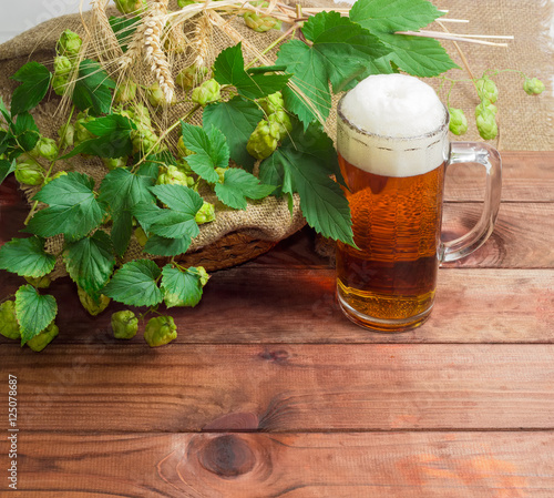 Aluminium Prints Beer / Cider Glass of beer, branches of hops, barley and wheat spikes