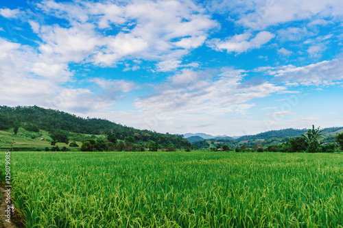 Deurstickers Groene beautiful view Rice Field or paddy landscape nature and sky for