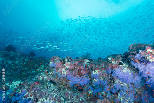 Canvas Prints Textures Maldivian Sea