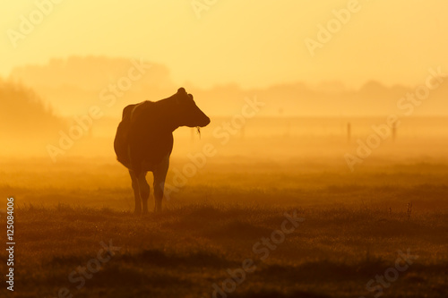 one cow on a foggy field