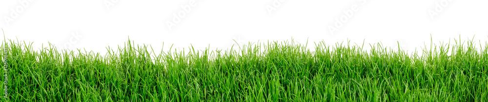 Fototapeta Gras Wiese Rasen