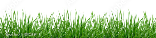 laka-zdzbla-trawy-wolne