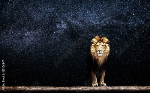 Portrait of a Beautiful lion, lion in the starry night