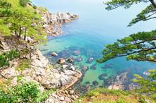 Korean Rock Pines Over The Sea...