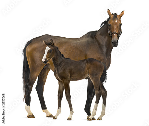 Foto Side view of a mare and her foal
