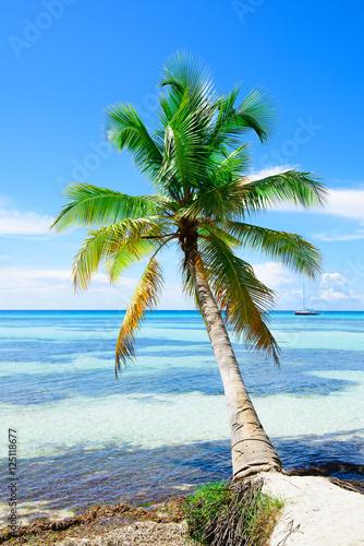 palm-ocean-sky