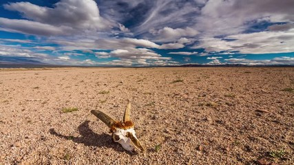 Fototapeta na wymiar Skull of a dead animal in the Gobi Desert. Mongolia. Time Lapse