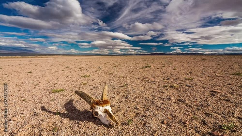 Fototapeta Skull of a dead animal in the Gobi Desert. Mongolia. Time Lapse