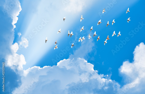 Canvas Print - flock of pigeons flying in blue sky among clouds to meet sun bea