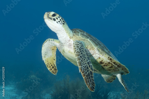 Deurstickers Schildpad Underwater Sea Turtle