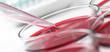 Leinwanddruck Bild - laboratory petrischalen