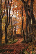 Autumn forest terrenkur path with orange-red oak and maple trees beautiful scenery