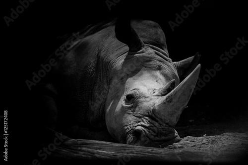 Poster Rhino Sad Rhino