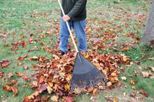 Man Working In The Yard To Clean Fallen Leaves By Fan Rake