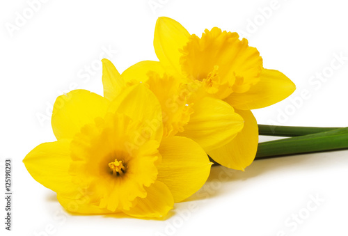 Door stickers Narcissus daffodils