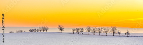 Foto op Plexiglas Oranje winter landscape with tree alley in sunset