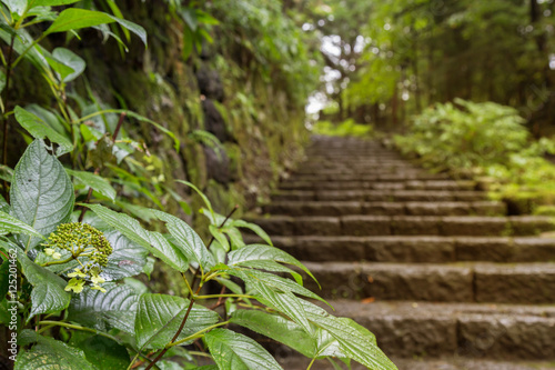 Poster Jardin green leaf and stone stairs leading up a walkway through the forest after the rain with warm lighting in nikko world heritage, Japan. selective focus.