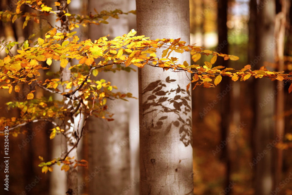 Obraz Jesień w lesie fototapeta, plakat