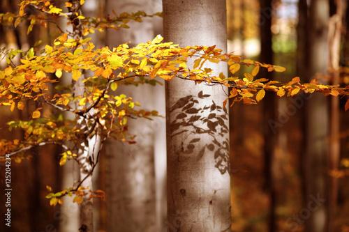 Fototapeta Jesień w lesie obraz