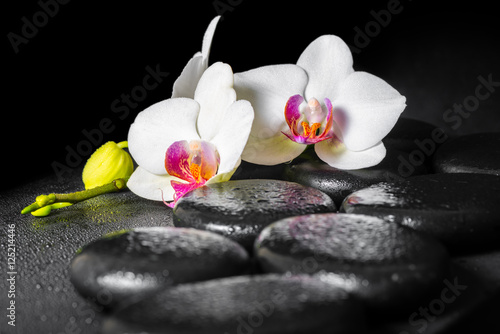 Poster Spa beautiful spa still life of blooming white and red orchid flower