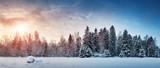 Fototapeta Landscape - Beautiful tree in winter landscape in late evening in snowfall