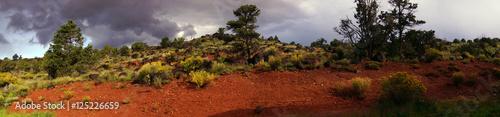 Garden Poster Brown Panorama, Backlit desert landscape