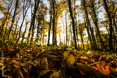 фотография  View of autumn forest from ground