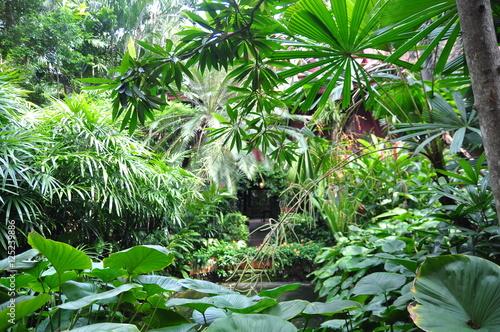 Green tropical garden in asia