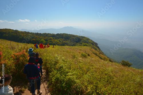 Fotografie, Obraz  Thailand Landscape : Doi Inthanon nature walking trail, Chiang Mai
