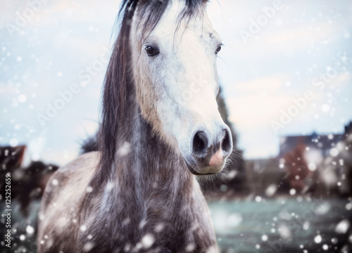 Photo Gray horse at winter nature background with fall of snow