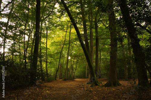 Deurstickers Herfst Woodland scene at the start of autumn