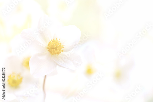 Fototapeta Pastel flower background. Floral art concept. obraz na płótnie