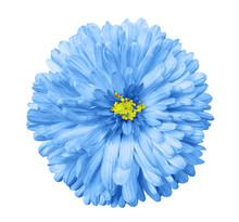 .blue Flower, White Isolated B...